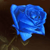 Blue Rose Worldwide