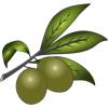 Olivelabs, Inc.