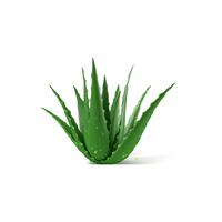 Zamidar Herbal
