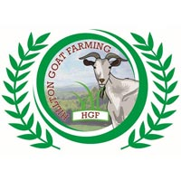 Hillton Goat Farming
